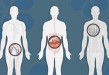 """Тесты, рекомендуемые для вас, поможет выявить """"Анатомическая панель""""!"""