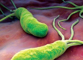 Synevo тесты на бактерии Helicobacter pylori