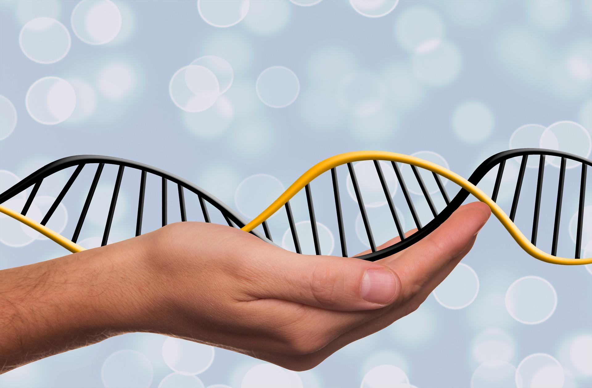 Synevo цитогенетическое тестирование