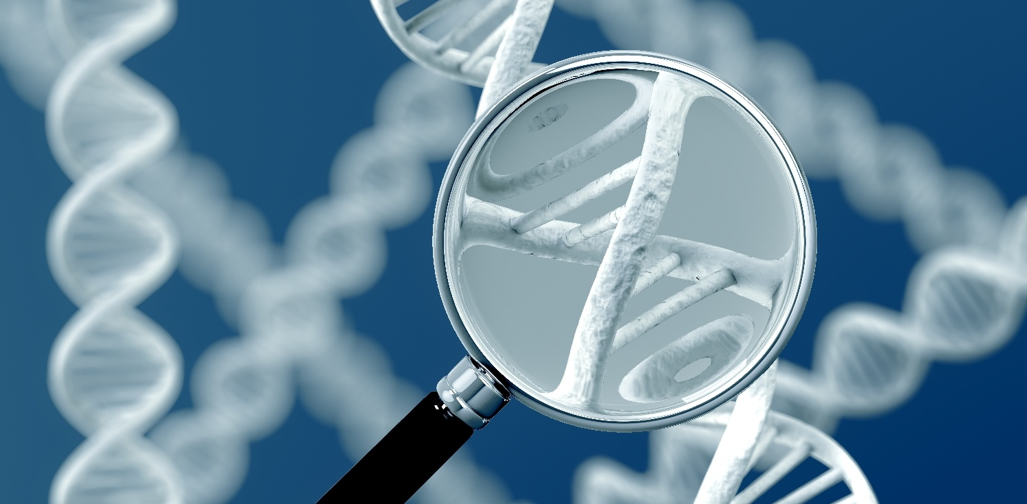 Synevo генетические тесты