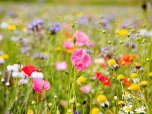 Synevo: наслаждаемся весной без аллергий