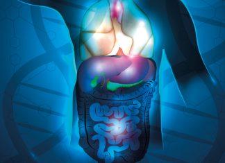 Органы брюшной полости Журнал Sanatate
